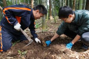 竹の子堀の様子